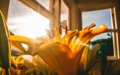 Dringend tijd om je huis en tuin summerproof te maken
